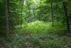 Indiana Woods